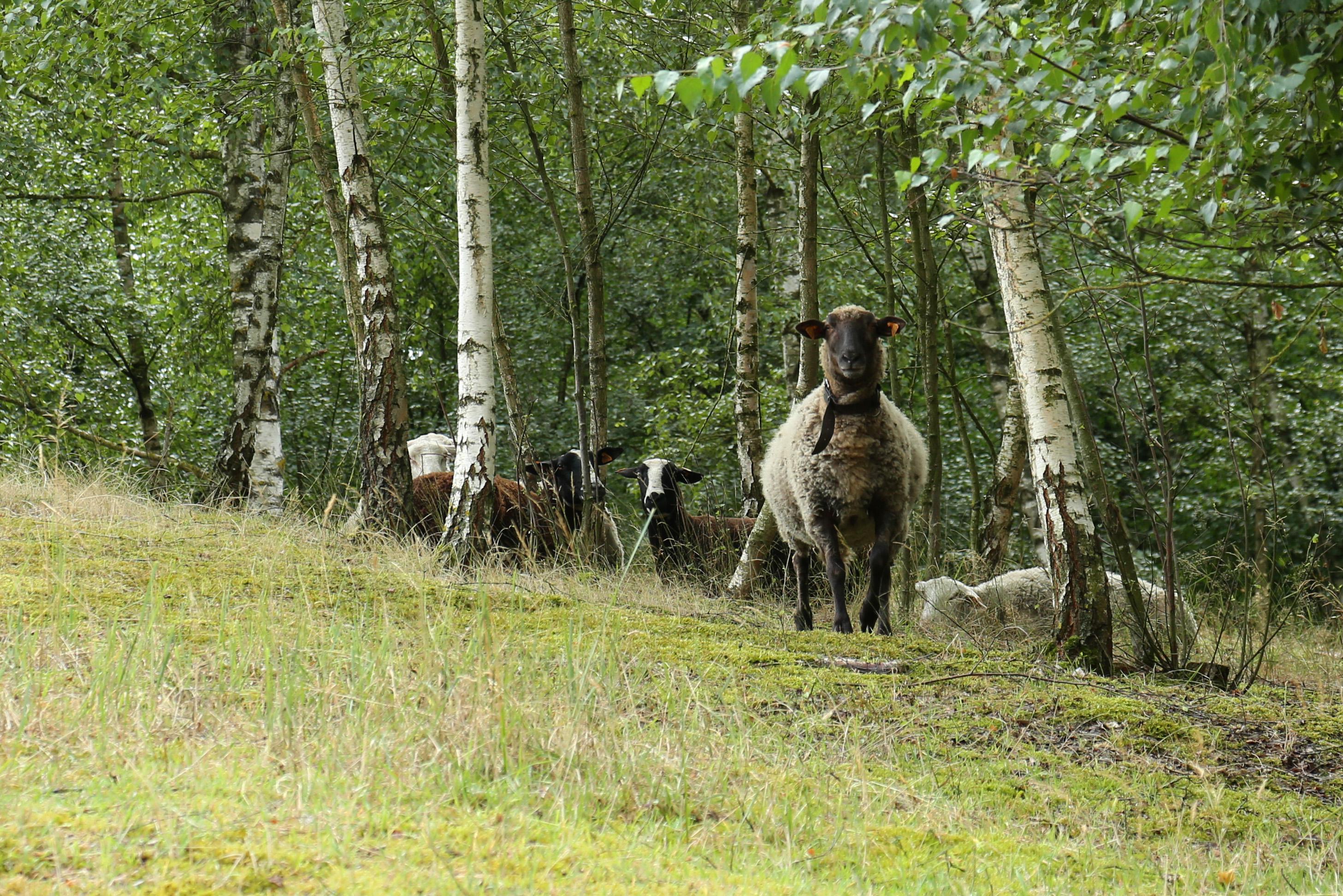 Le temps des agriculteurs-éleveurs ->title