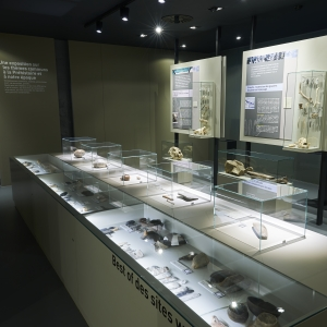 prehistomuseum_collections.jpg